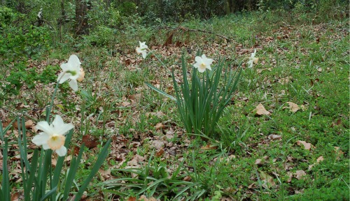 DSC_0167 spring flowers